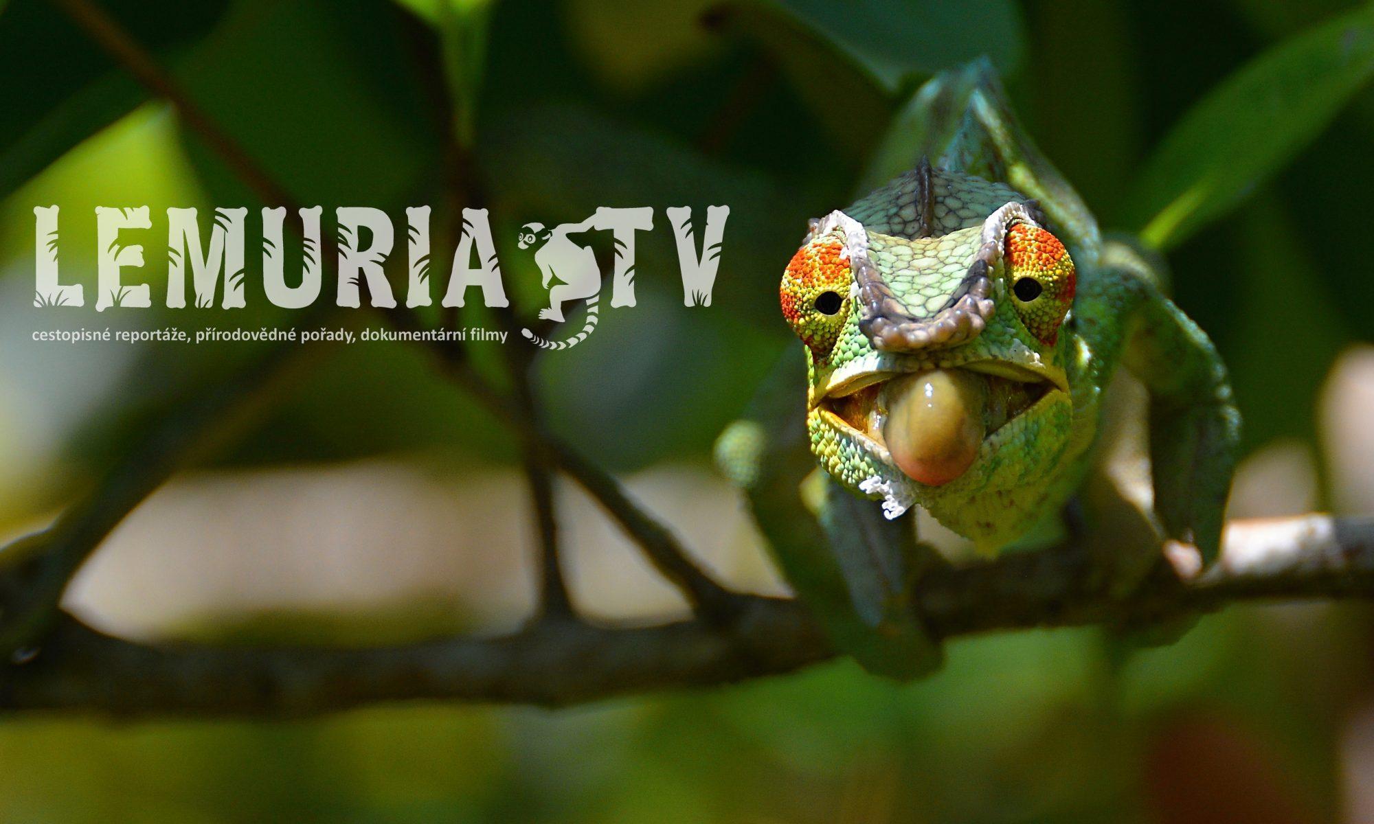 LEMURIA TV